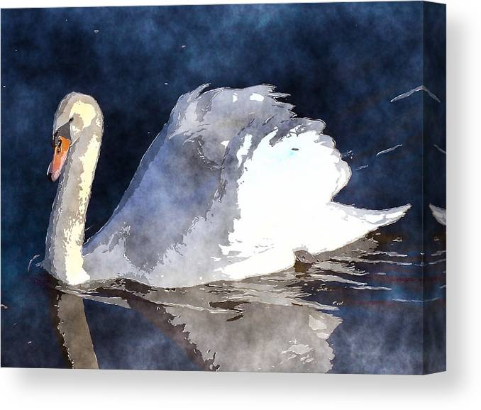 Swan Canvas Print featuring the photograph Swan by David G Paul