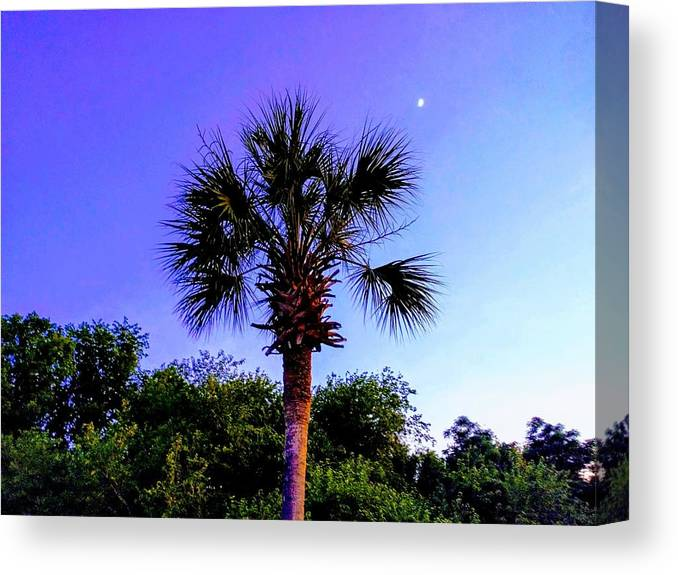 Palm Canvas Print featuring the photograph Sweet Dreams Carolinas by Sherry Kuhlkin