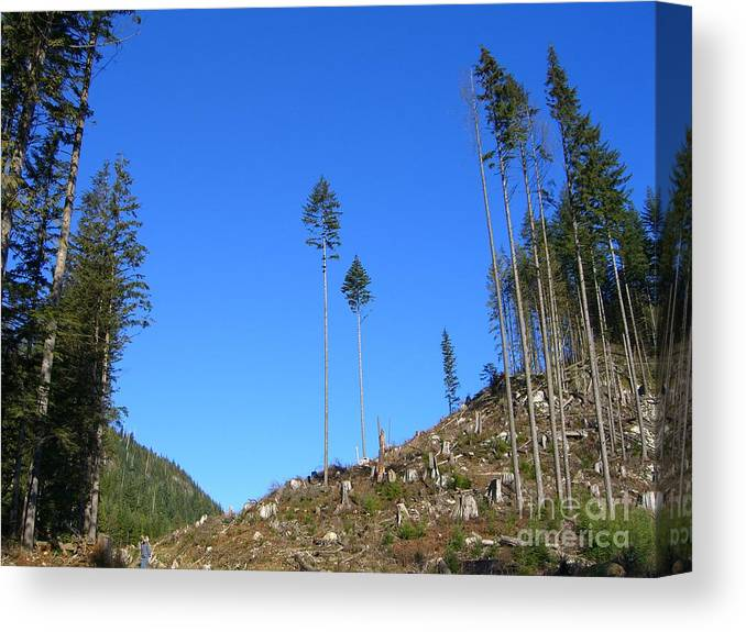 British Columbia Canvas Print featuring the photograph Tall Timbers by Jim Thomson