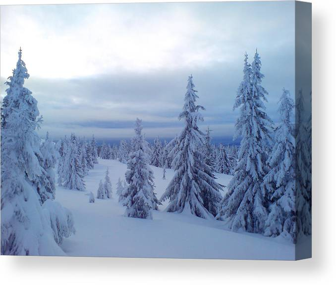 Trees Canvas Print featuring the photograph The Blue Hour by Are Lund