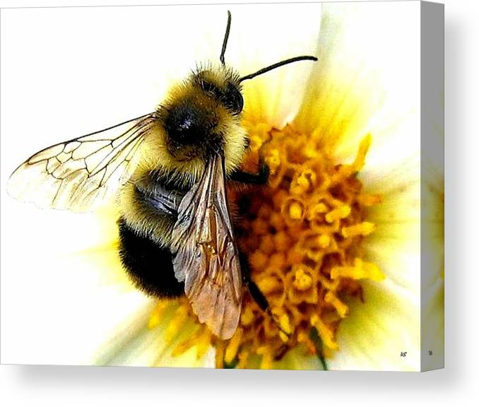 Honeybee Canvas Print featuring the photograph The Buzz by Will Borden