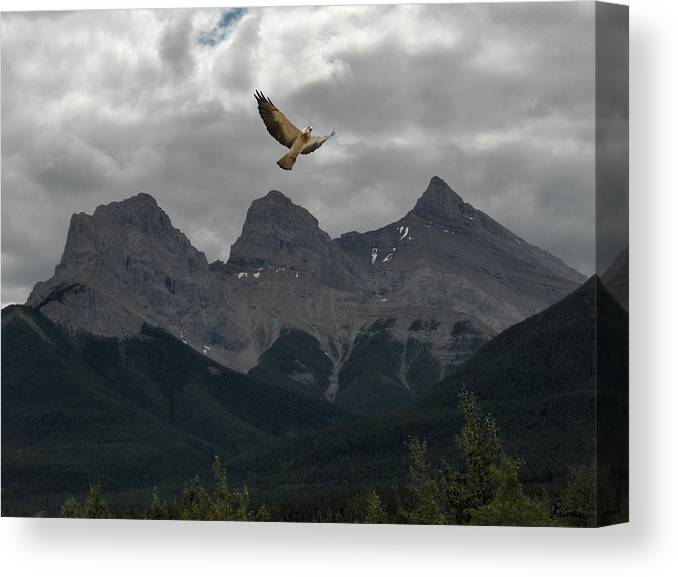 Hawk Mountains Trees Woods Banff Alberta Wild Bird Hunter Flying Three Sisters Canvas Print featuring the photograph The Calling by Andrea Lawrence