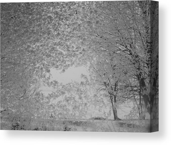 Landscape Canvas Print featuring the photograph The Clearing by John Kuti