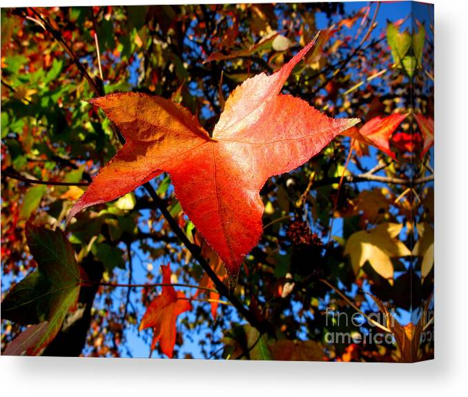 Fall Canvas Print featuring the photograph The Flavor Of Fall by PJ Cloud