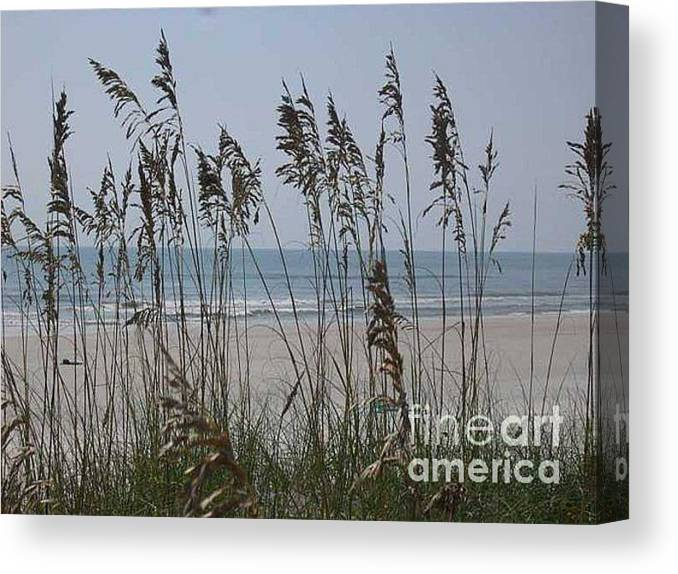 Florida Beach Near St. Augustine Canvas Print featuring the photograph Thru The Sea Oats by Barb Montanye Meseroll