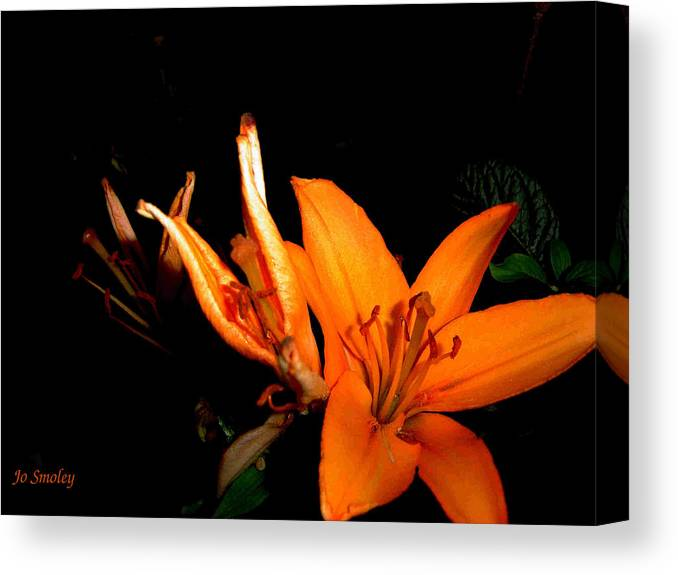 Tiger Lily Canvas Print featuring the photograph Tiger Lily by Joanne Smoley