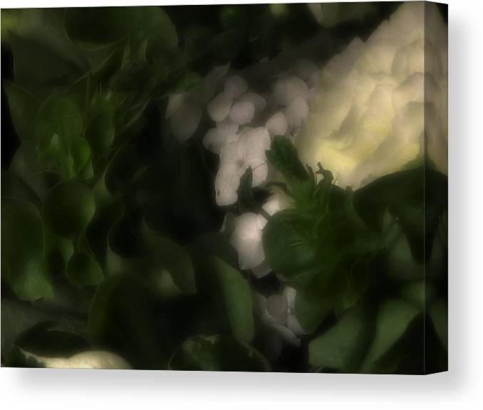 Bouquet Canvas Print featuring the photograph to_023_b Siege Of the White by Drasko Regul
