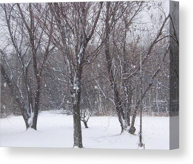 Snow Canvas Print featuring the photograph Today - November 25 - Photograph by Jackie Mueller-Jones