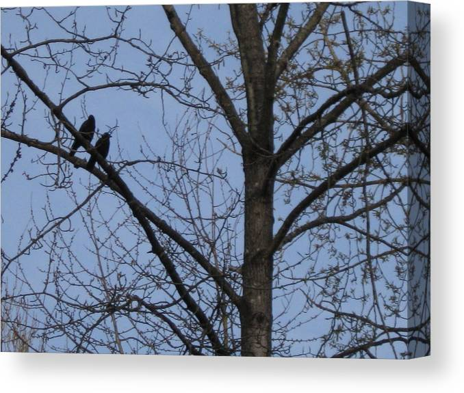 Animal Two Crows Canvas Print featuring the photograph Two Crows by AJ Brown