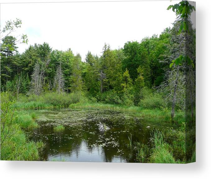 Landscape Canvas Print featuring the photograph Where The Green Things Live by Dmytro Toptygin