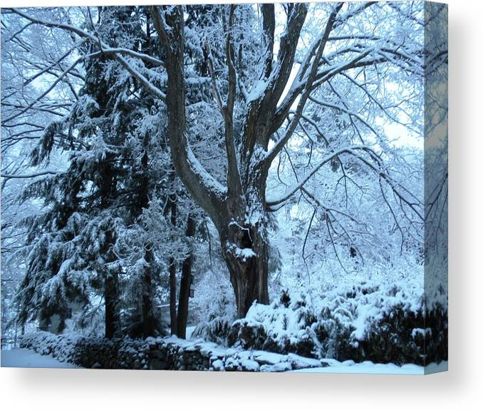 Canvas Print featuring the photograph Winter's Touch by Karen Moulder