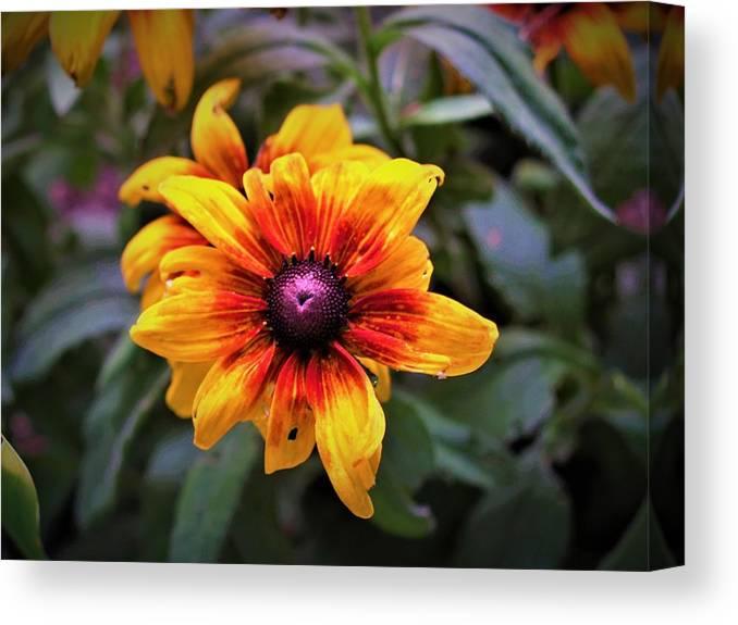Flower Canvas Print featuring the photograph Garden Gem by Jenna Monroe