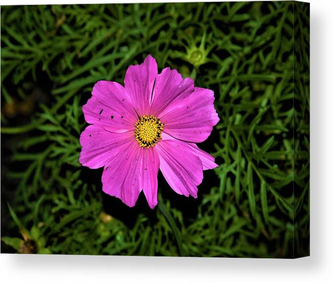 Flower Canvas Print featuring the photograph Intense Vivid Flower by Jenna Monroe