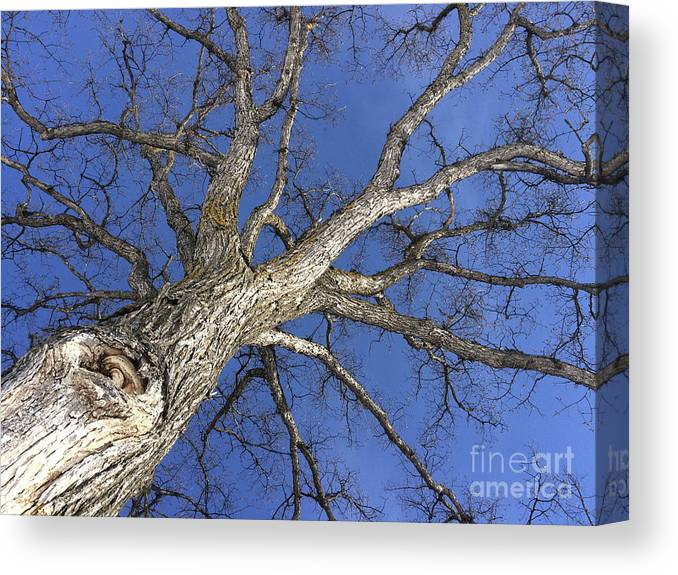Tree Canvas Print featuring the photograph Old Oak Tree by Mary Mikawoz