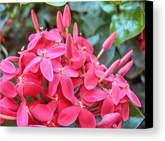 Flowers Canvas Print featuring the photograph Magenta Flora by Nicole I Hamilton