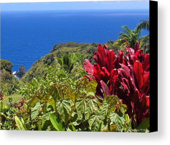 Landscape Canvas Print featuring the photograph Perfect View by Nicole I Hamilton