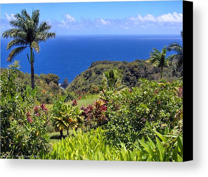 Coast Canvas Print featuring the photograph Untouched by Nicole I Hamilton