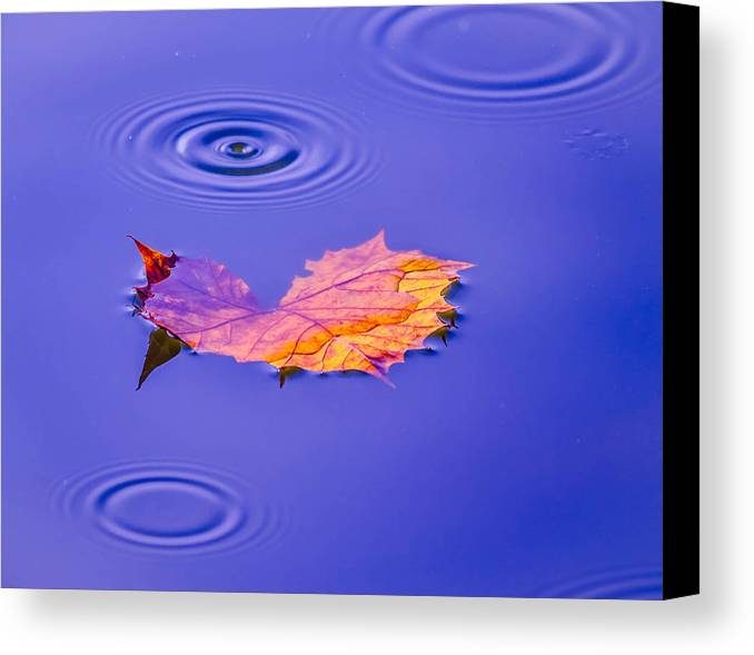 Abstract Canvas Print featuring the photograph Autumn Drops by Brian Stevens