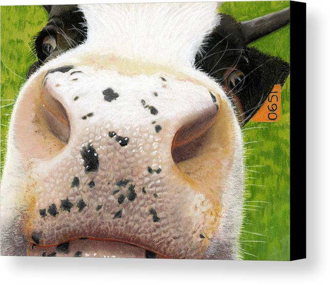 Kitchen Canvas Print featuring the painting Cow No. 0651 by Carol McCarty