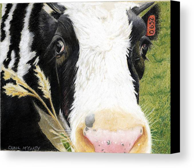 Kitchen Canvas Print featuring the painting Cow No. 0652 by Carol McCarty