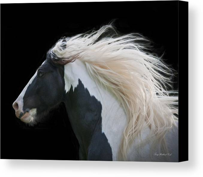 Equine Canvas Print featuring the photograph Black And White Study IIi by Terry Kirkland Cook