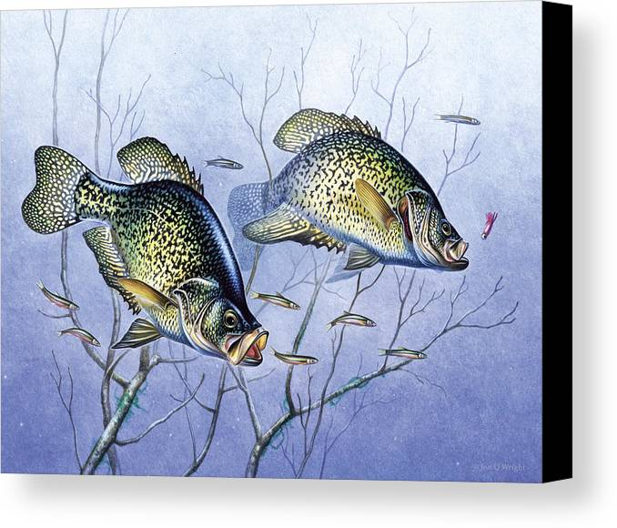 Jon Q Wright Canvas Print featuring the painting Crappie Brush Pile by JQ Licensing