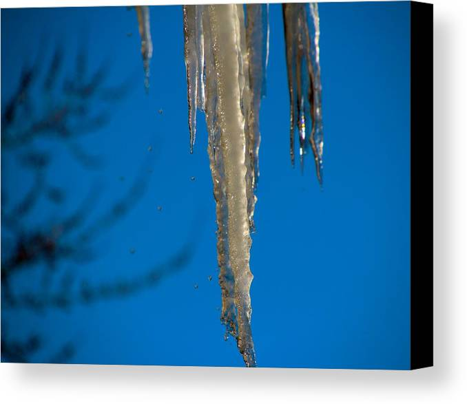 Winter Canvas Print featuring the photograph Icicles 1 by Debbie Nobile
