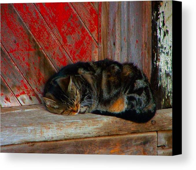 Cats Canvas Print featuring the photograph The Old Mill Cat by Julie Dant