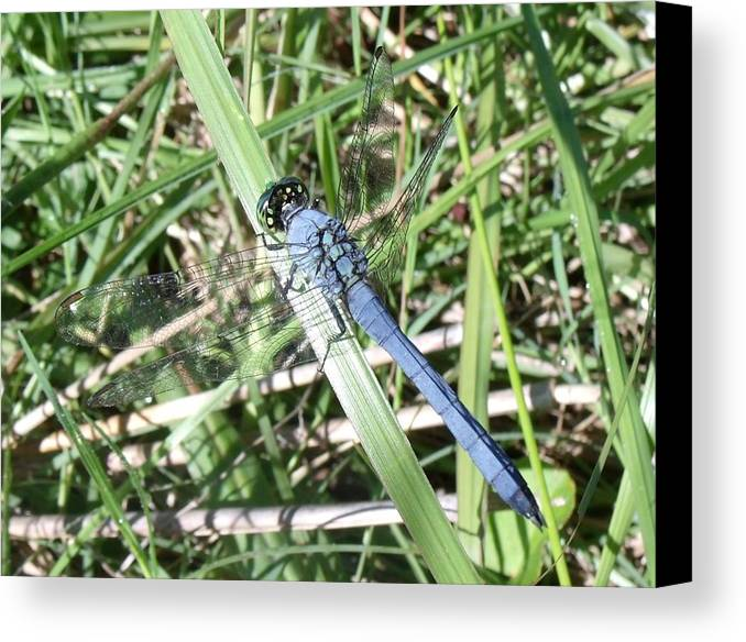 Dragonfly Canvas Print featuring the photograph Blue Dragonfly by Crystal Williams