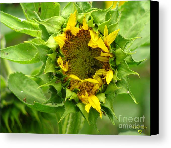 Flower Canvas Print featuring the photograph May I Sleep A Little While Longer by Donna Brown