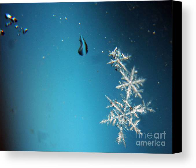 Snowflakes Canvas Print featuring the photograph Snowflakes On My Window by Heather Applegate