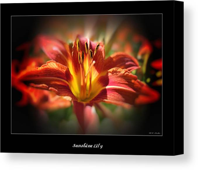 Sunshine Lily Canvas Print featuring the photograph Sunshine Lily by Heinz G Mielke