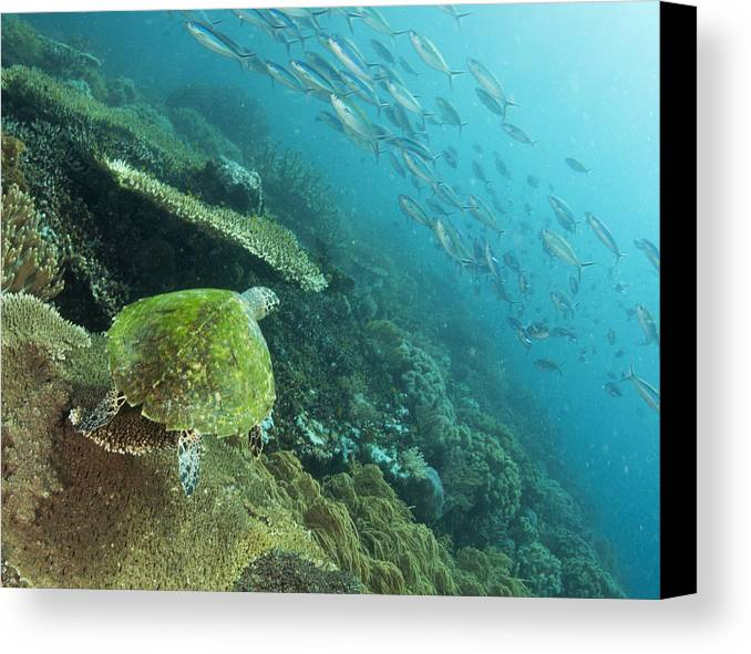 Sea Turtle Canvas Print featuring the photograph Turtle Eye View by Freund Gloria