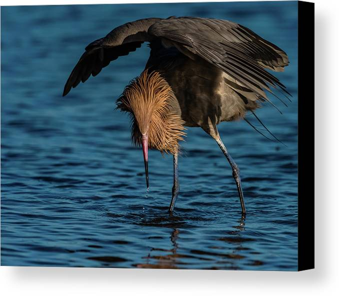 Birds Canvas Print featuring the photograph Dancing The Food Dance by Donald Trimble