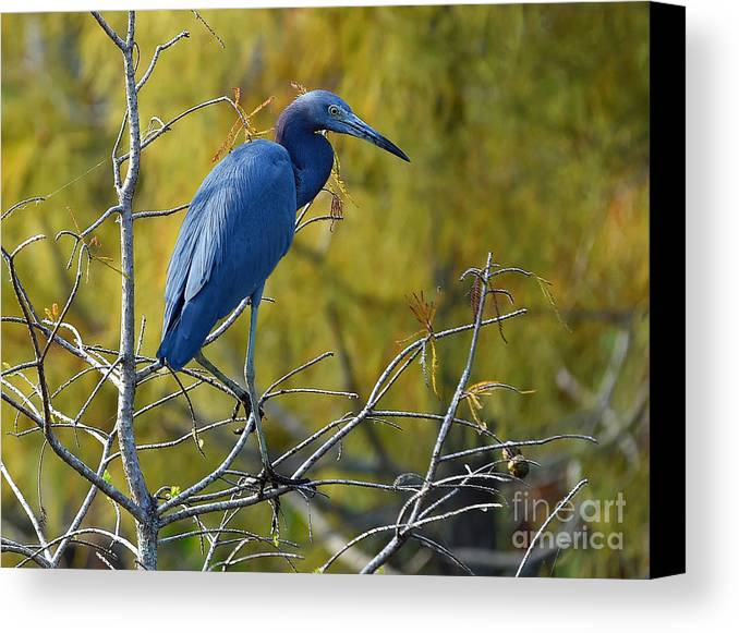Canvas Print featuring the photograph 7825 by Don Solari