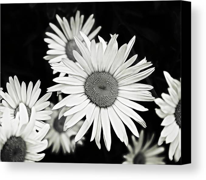 Flower Canvas Print featuring the photograph Black And White Daisy 3 by Alisha Jurgens