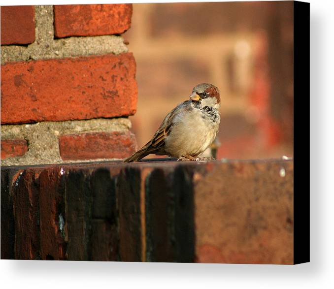Bird Canvas Print featuring the photograph Brick And Bird by Jason Hochman