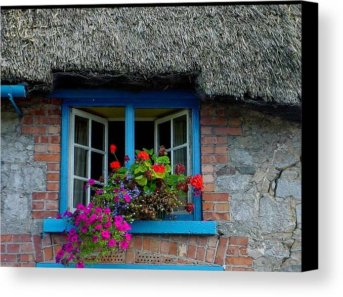 Adare Canvas Print featuring the photograph Bright Blooms by PJ Cloud