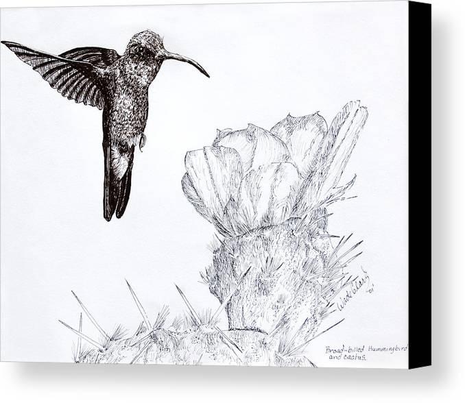 Wildlife Canvas Print featuring the drawing Broadbilled Hummingbird by Wade Clark