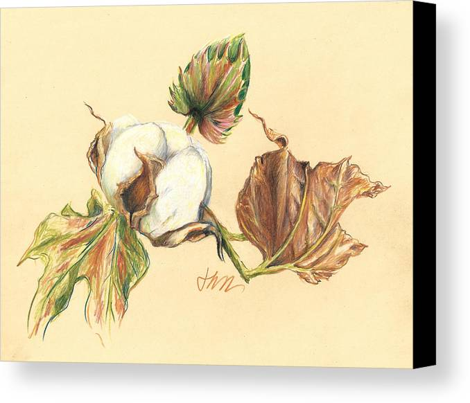 Graphite Pencil Drawing Canvas Print featuring the drawing Colored Pencil Cotton Plant by Jacki Kellum