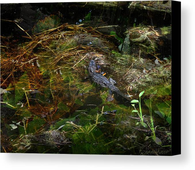 Everglades Canvas Print featuring the photograph Gator Swamp by Joseph G Holland