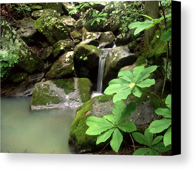 Canvas Print featuring the photograph Green by Curtis J Neeley Jr