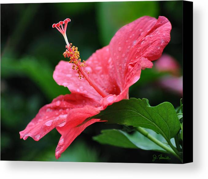Hawaii Canvas Print featuring the photograph Kauai Beauty by Joe Bonita