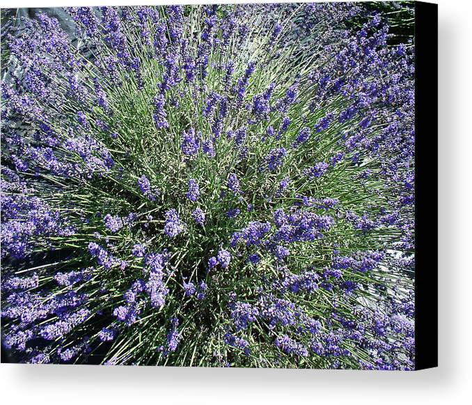 Flowers Canvas Print featuring the photograph Lavender 2 by Valerie Josi