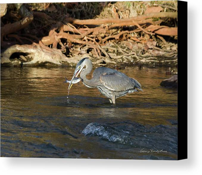 Heron Canvas Print featuring the photograph Lunch On The Neuse River by George Randy Bass