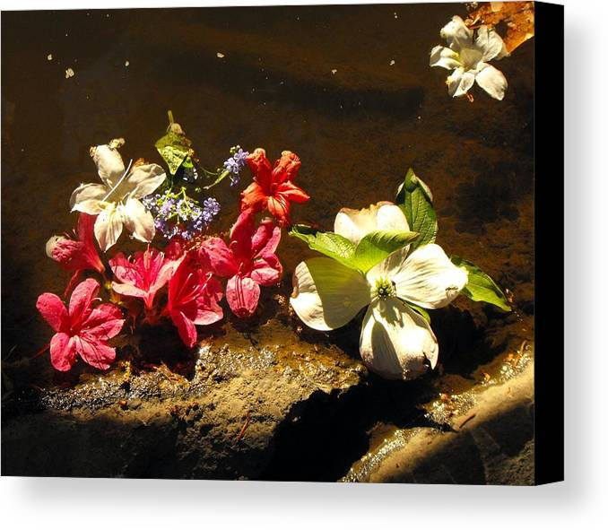Water Mud Flowers Spring Canvas Print featuring the photograph Muddy Flowers by Mindy Roth