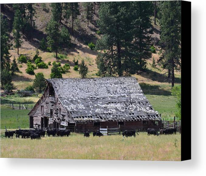 Old Canvas Print featuring the photograph Old Barn by Linda Larson