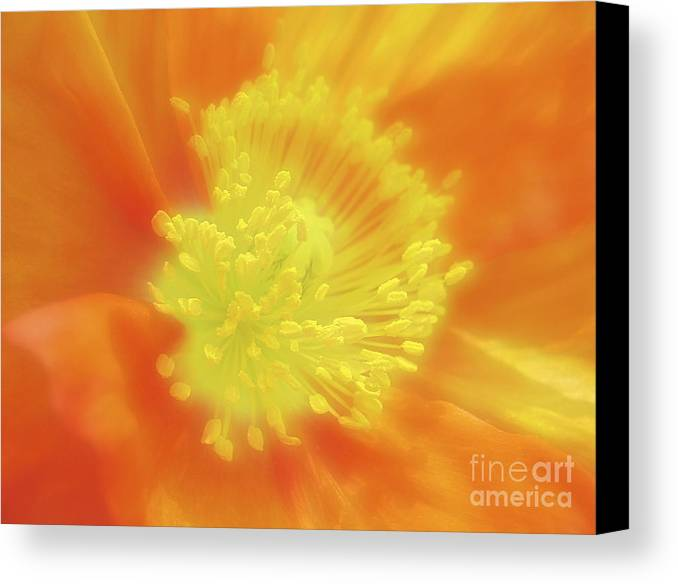 Photography Canvas Print featuring the photograph Orange Poppy by Addie Hocynec