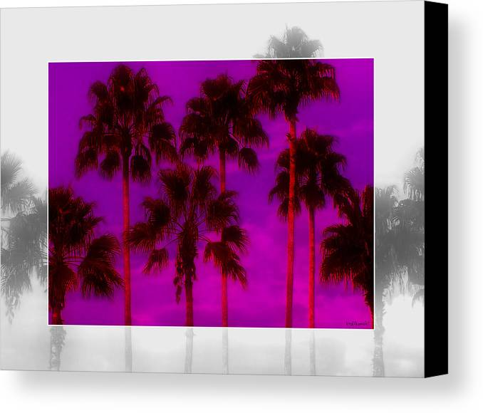 Palm Canvas Print featuring the photograph Palm Tree Heaven by Kenneth Krolikowski