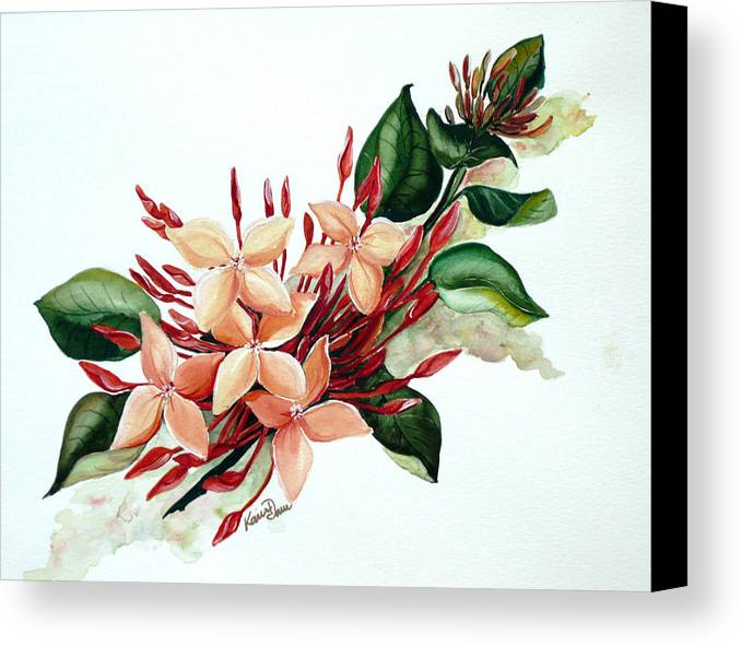 Floral Peach Flower Watercolor Ixora Botanical Bloom Canvas Print featuring the painting Peachy Ixora by Karin Dawn Kelshall- Best